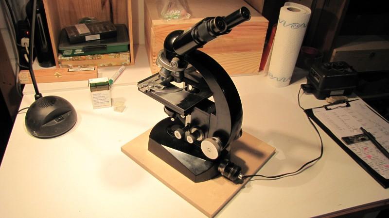 Trichonaden abstrich mikroskop archiv internet taubenschlag