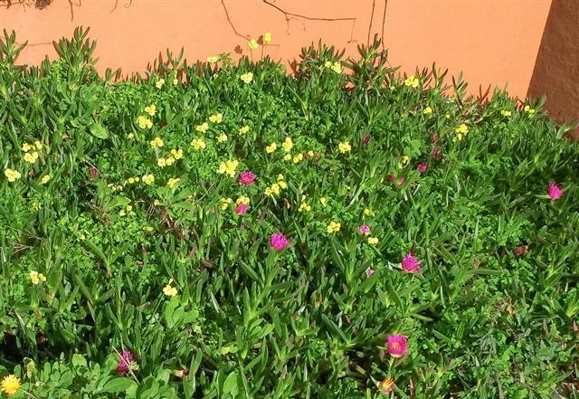 Mittagsblumen_3940.jpg