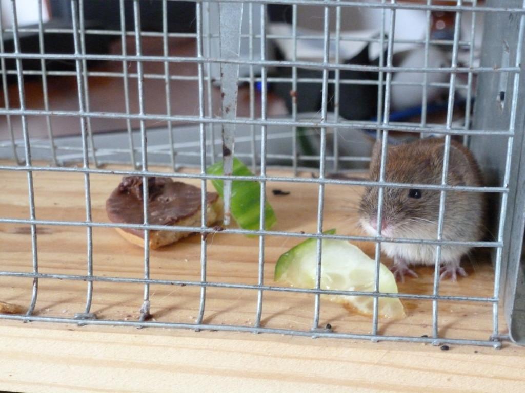 Mäuse im Womo - Wohnmobil Forum Seite 8