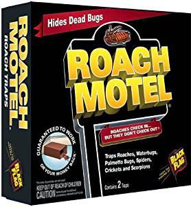 kakerlaken im camper was tun unterwegs wohnmobil forum seite 1. Black Bedroom Furniture Sets. Home Design Ideas