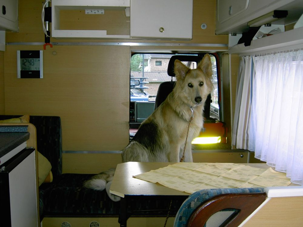 wo sitzt der hund im wohnmobil wohnmobil forum. Black Bedroom Furniture Sets. Home Design Ideas
